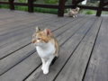 Cats of Houtong, #0382