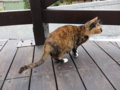 Cats of Houtong, #0388