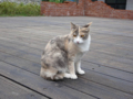 Cats of Houtong, #0389