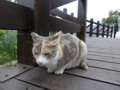 Cats of Houtong, #0390