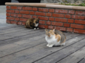 Cats of Houtong, #0391