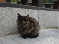 Cats of Houtong, #0393