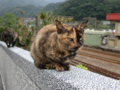 Cats of Houtong, #0394