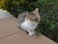 Cats of Houtong, #0395