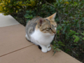 Cats of Houtong, #0396