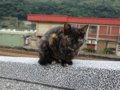 Cats of Houtong, #0397