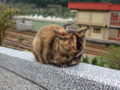 Cats of Houtong, #0398