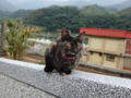 Cats of Houtong, #0399