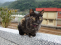 Cats of Houtong, #0400