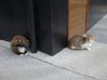 Cats of Houtong, #0403