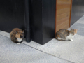 Cats of Houtong, #0404