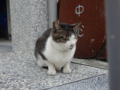 Cats of Houtong, #0405