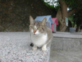Cats of Houtong, #0406
