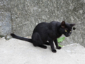 Cats of Houtong, #0407