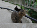 Cats of Houtong, #0408