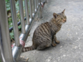 Cats of Houtong, #0410