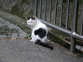 Cats of Houtong, #0411