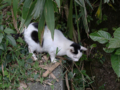 Cats of Houtong, #0413