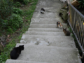 Cats of Houtong, #0421