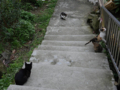 Cats of Houtong, #0422