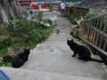 Cats of Houtong, #0424