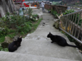 Cats of Houtong, #0425