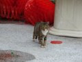 Cats of Houtong, #0431