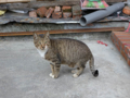 Cats of Houtong, #0432