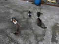 Cats of Houtong, #0434