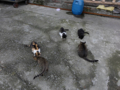 Cats of Houtong, #0435