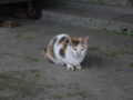 Cats of Houtong, #0439