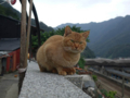 Cats of Houtong, #0444