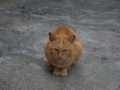 Cats of Houtong, #0446