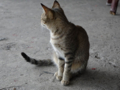 Cats of Houtong, #0452