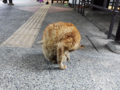 Cats of Houtong, #0456