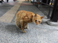 Cats of Houtong, #0457