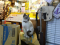 Cats of Houtong, #0459