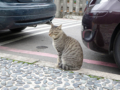 Cats of Houtong, #0460