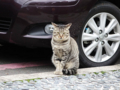 Cats of Houtong, #0461