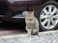 Cats of Houtong, #0462