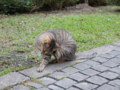Cats of Houtong, #0463