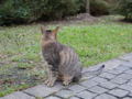 Cats of Houtong, #0464