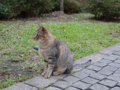 Cats of Houtong, #0465