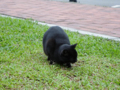 Cats of Houtong, #0466