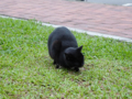 Cats of Houtong, #0467