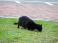 Cats of Houtong, #0475