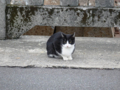 Cats of Houtong, #0476