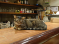 Cats of Minimal Cafe, #0484