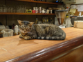 Cats of Minimal Cafe, #0487