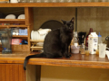 Cats of Minimal Cafe, #0502